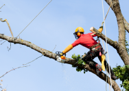 Tips of Becoming a successful or professional Arborist