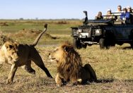Get ready for greatest adventure with African Wildlife Safaris