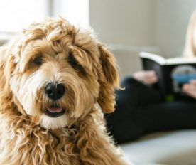 Find a Caring Companion for your Pet While Reaching for your Travel Goals